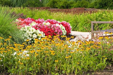 Northern Virginia Landscaping | Begonias and Black Eyed Susans