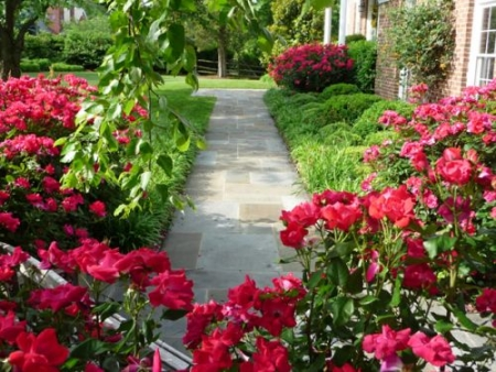 Backyard Landscaping: More than just Grass | Washington DC