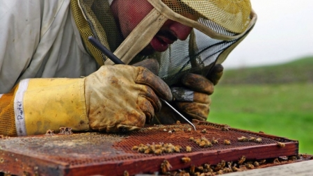 Local Scientists Discover What's Killing The Bees